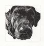 Black Labrador card