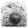 Labradoodle dog card