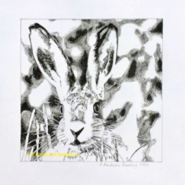 Line art drawing of a Hare